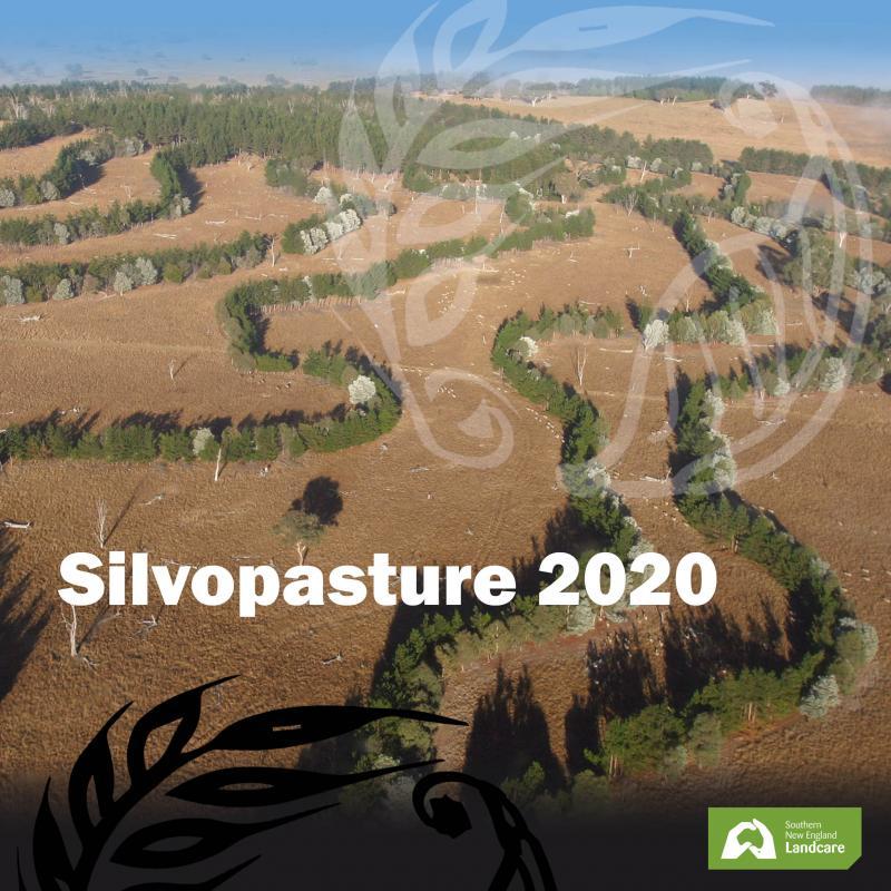 Silvopasture 2020