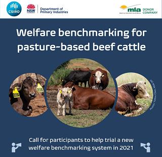 Beef Cattle Welfare Benchmarking - seeking trial participants