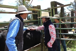 Ladies in Livestock Events at Guyra and Walcha