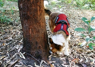 Tails Wagging on the Research Trail
